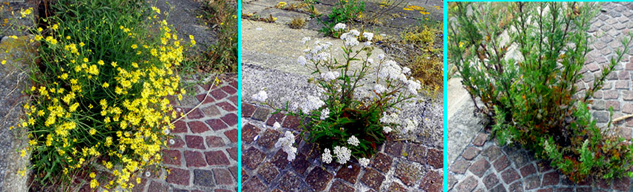 collage planten