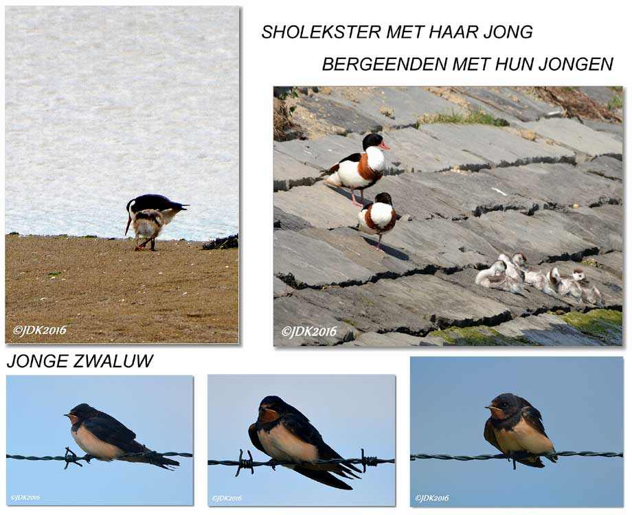 collage jong leven